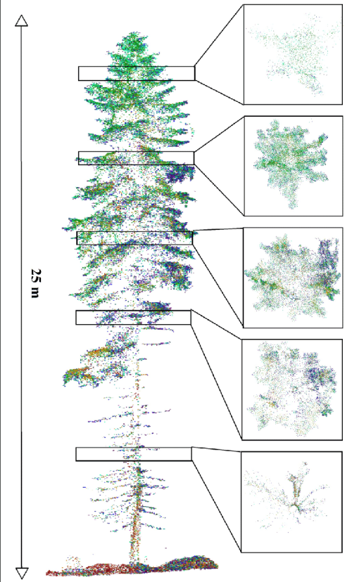 small resolution of the point cloud coverage of a scots pine tree in a medium forest plot in the