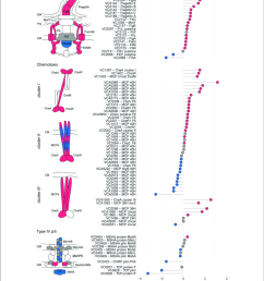 relative protein abundances of components of the flagellum chemotaxis arrays and t4p the [ 850 x 974 Pixel ]