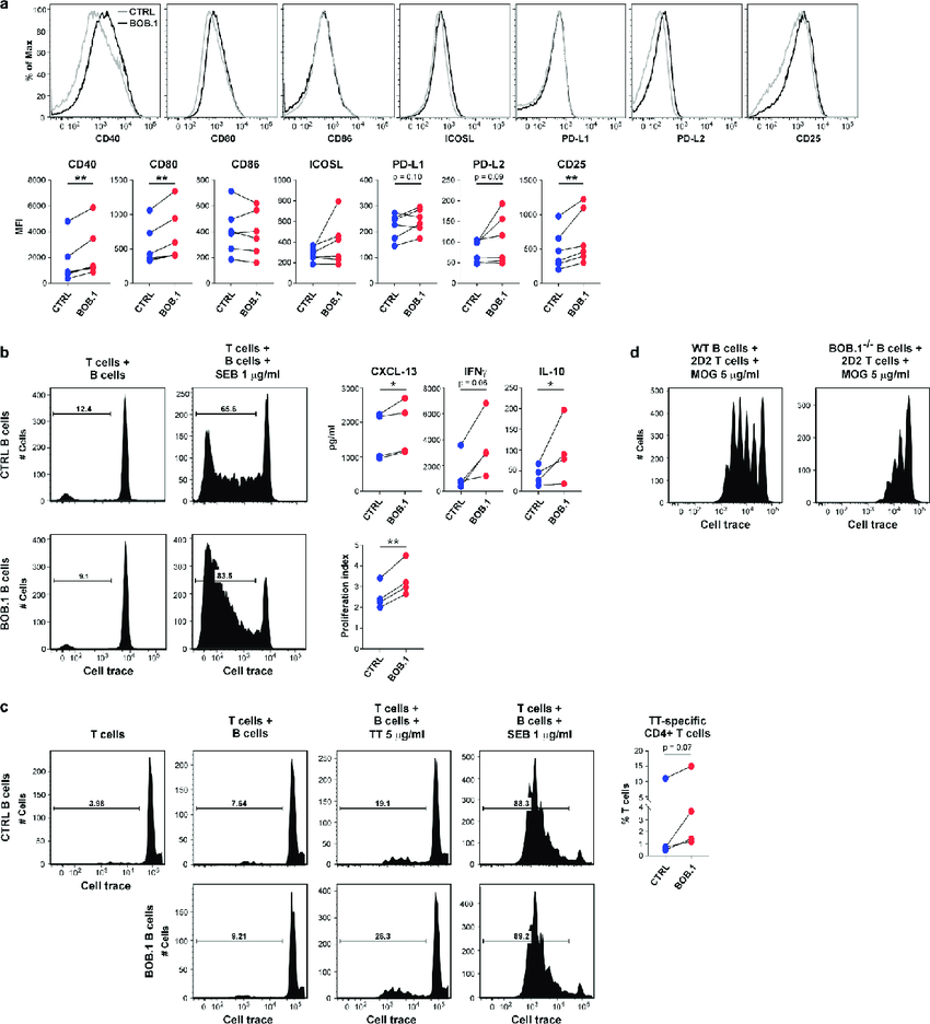 B cells with high levels of BOB.1 express elevated levels