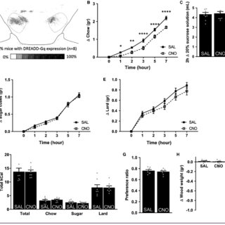Energy expenditure upon chemogenetic activation of LH GABA