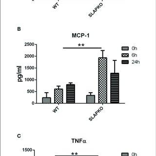(PDF) SLAP Is a Negative Regulator of FcεRI Receptor