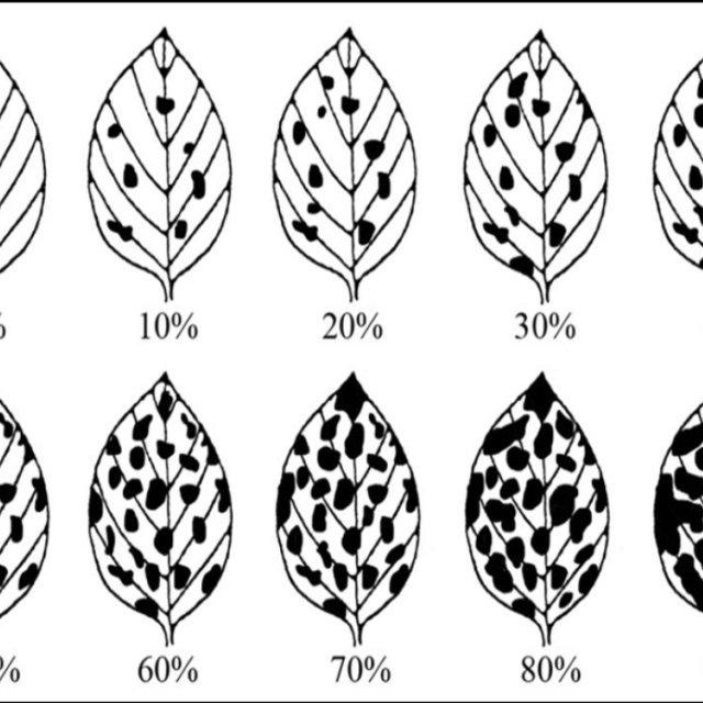 (PDF) Grading of Soybean Leaf Disease Based on Segmented