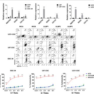 NKG2DL expression in glioblastoma cell lines and patient