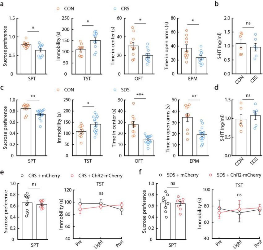 Behavioural effects of activation of the 5-HTDRN→SOMCeA