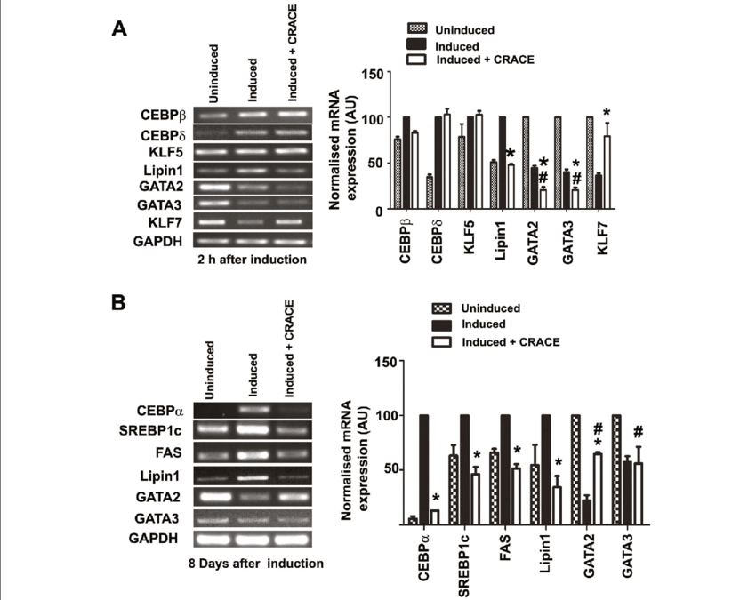 CRACE modulated expression of pro-and anti-adipogenic