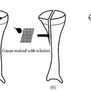 Bone marrow mesenchymal stem cell viability was assessed