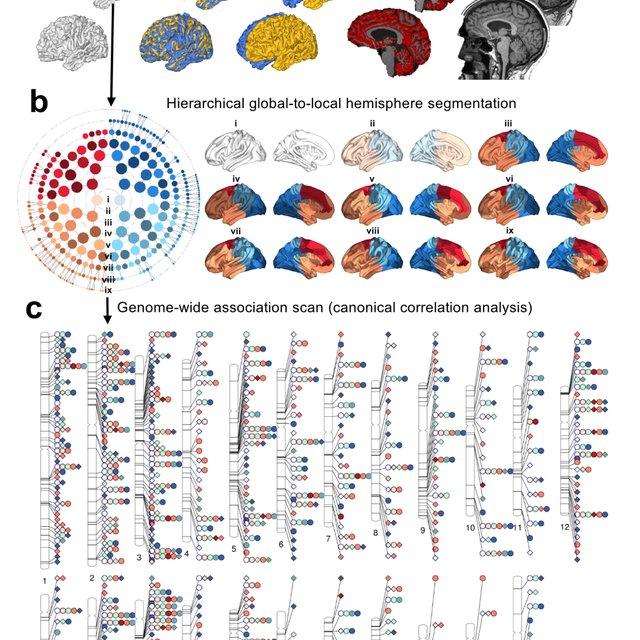 Multivariate genome-wide association study (GWAS) of brain shape. a,... | Download Scientific Diagram