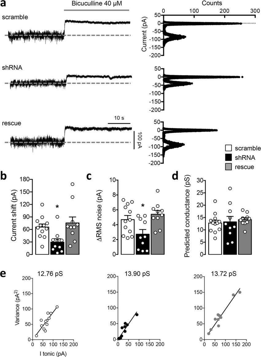 PCDH19 shRNA-mediated downregulation reduces the GABA