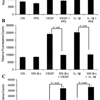 Effect of VEGF and IL-1β on endothelial cell permeability