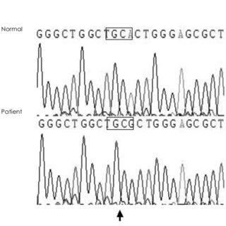 Vital Signs Diagram X-ray Diagram Wiring Diagram ~ Odicis