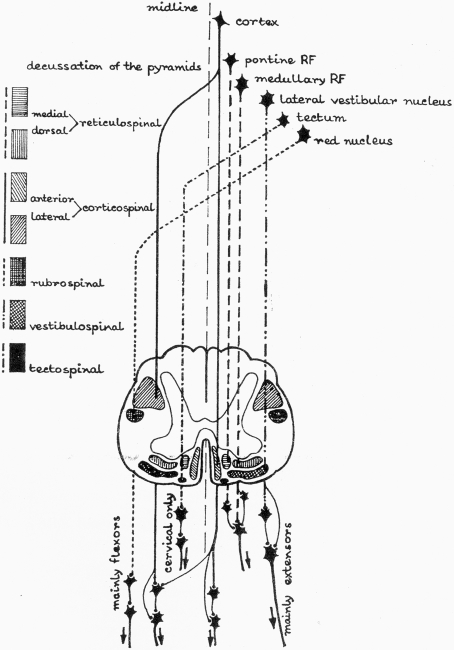 reticular formation diagram chevrolet impala wiring supraspinal descending pathways in spinal cord rf