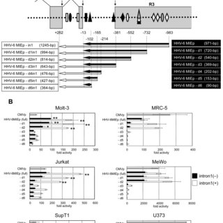 The NF-kB-binding site is critical for the promoter
