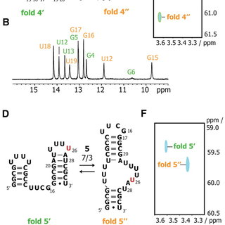 Analysis of CPMG relaxation dispersion of RNA sequence 6