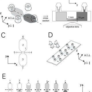 New chamber format for chemotaxis experiments. (A) Chamber