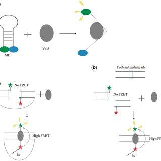 Schematic representation of the label-free aptamer
