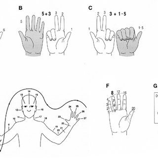 Variability in finger counting systems, illustrated for