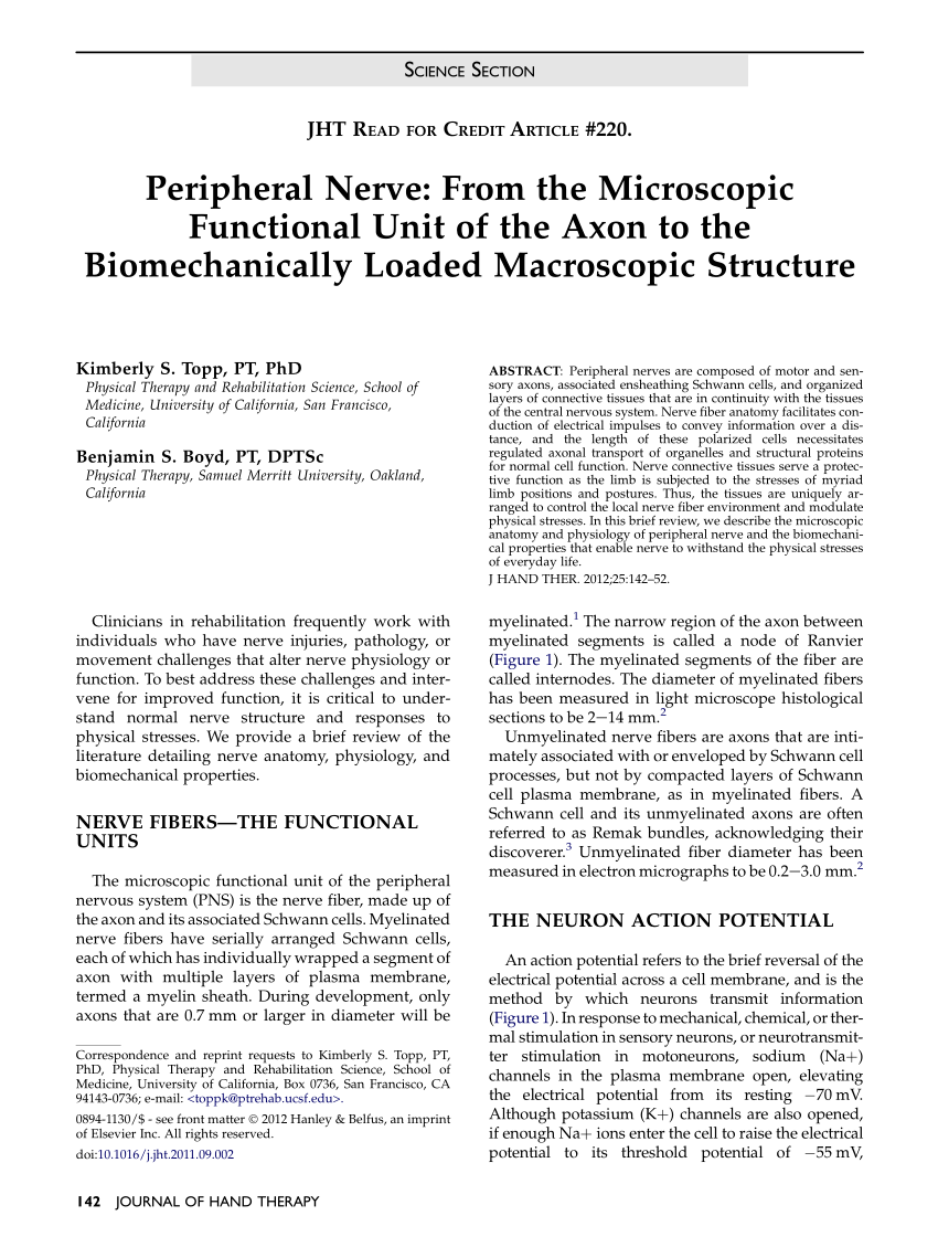 Connective Tissues Of Peripheral Nerve Epineurial Arterioles Send