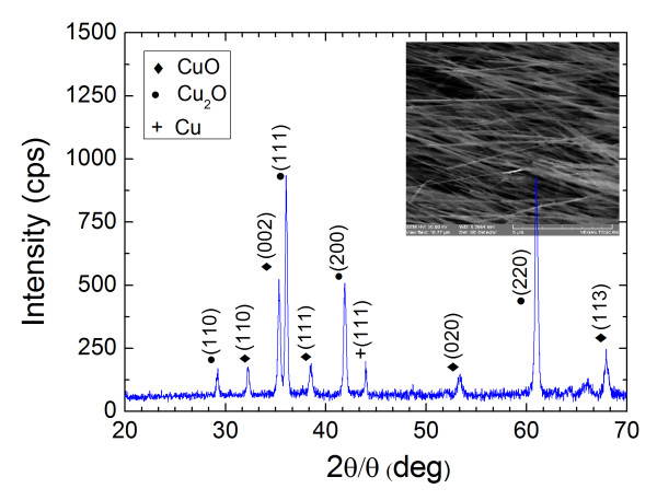 Ultrafast hole carrier relaxation dynamics in p-type CuO