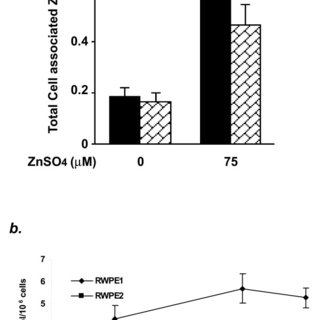 Diagram of zinc containing neuron. Zinc is loaded into