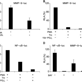 Luciferase assay of MMP-9 and NF-κ B cis-reporter vectors