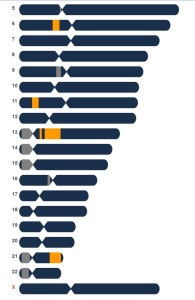 DNA Chromosome Chart