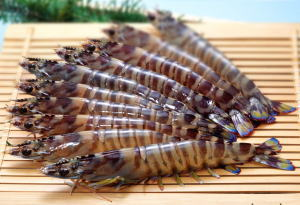 tiger-shrimp