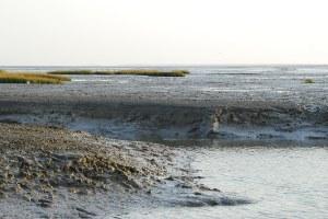 Les prÈ-salÈs du port du PavÈ sur l'estuaire de la SËvre niortaise ‡ Charron. Marais poitevin