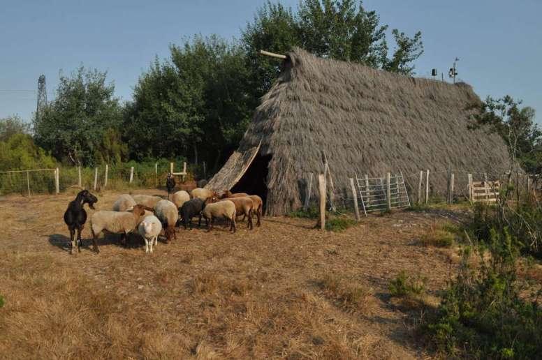 la bergerie et son troupeau