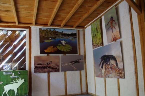 Exposition naturaliste d'Objectif Nat' © K. Lelarge