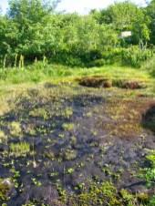 Zone humide de source sous Pierre-sur-Haute