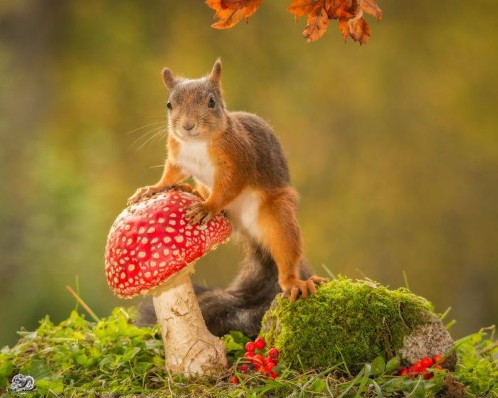 Fall Leaves Wallpaper Windows 7 Photographer Shoots Squirrels In His Backyard His