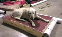 Man Builds His Elderly Dog An Air-Conditioned Bed So She ...