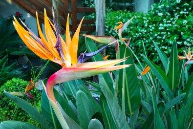 Photo-galerie-bleur-mer-plantes.jpg