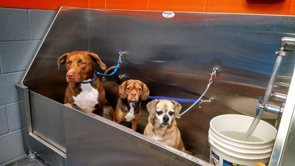 Pet Wash for Apartment Communities
