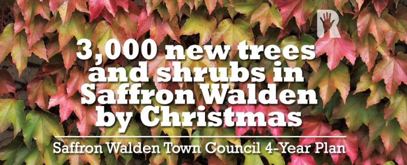 3,000 trees and shrubs to be planted in Saffron Walden by Christmas as part of R4U 'Re-Greening' programme