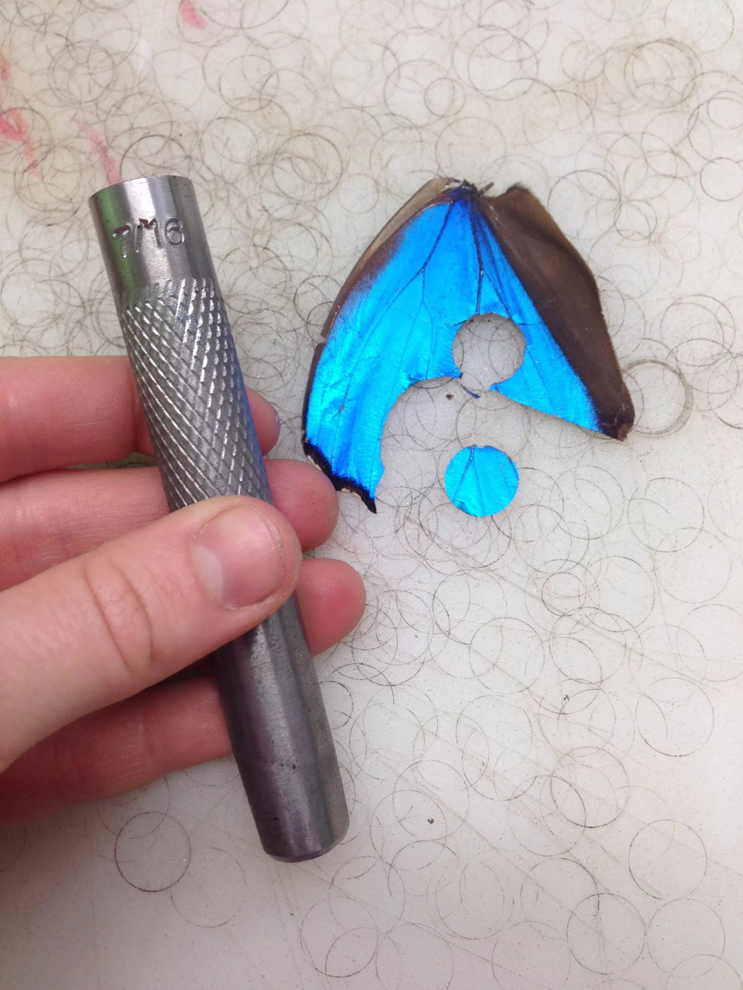 Using a metal punch on a butterfly wing