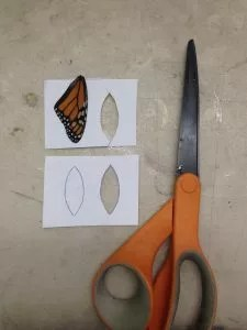 using paper as a template for trimming a butterfly wing