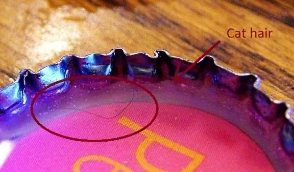 cat hair in resin