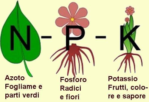 azoto fosforo potassio concimi organici