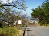 2/4 名護城公園の頂上付近の開花状況