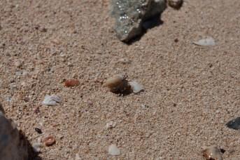 海岸で見つけたヤドカリ。