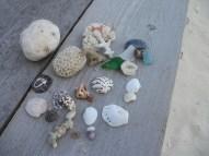 東館ビーチにて貝殻拾い。