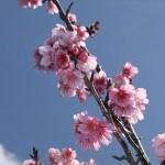 頂上の「天上展望台」付近の開花状況④(2016年2月9日)