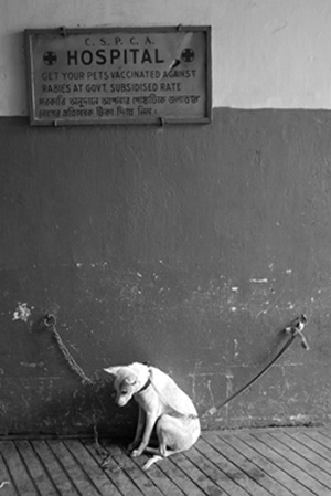 Animaux de compagnie euthanasie de chiens et chats par chambres  gaz Mythes et ralits
