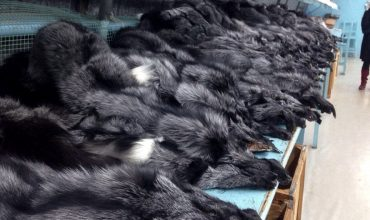 Respect for Animals launches online database detailing the use of fur on university fashion courses