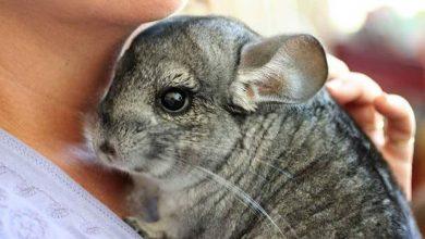 Serbian fur farming ban comes into force
