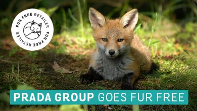THE PRADA GROUP ANNOUNCES FUR-FREE POLICY   AND JOINS THE INTERNATIONAL FUR FREE RETAILER PROGRAM