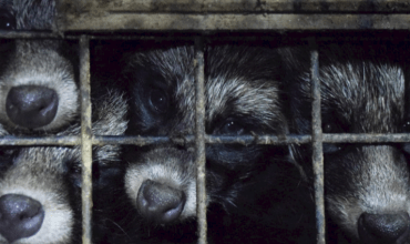Fur trade financial crisis continues-  but the industry declare they will fight back in 2020