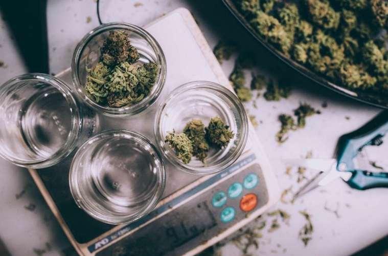Seattle Marijuana guide