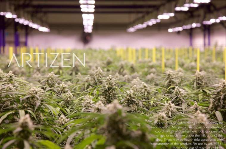 The Art and Zen of Legal Weed | Featuring Artizen Cannabis | Photo: www.artizencannabis.com
